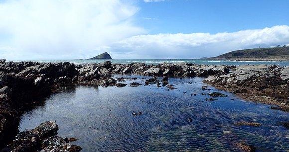Rock pools in Wembury, Plymouth, South Devon by Devon Wildlife Trust