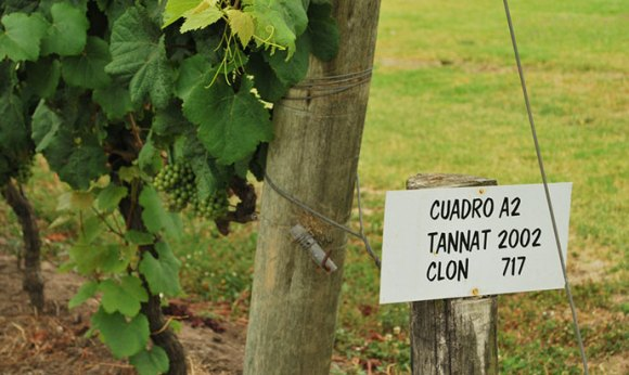 Wine, Uruguay  by Ana Raquel S. Hernandes