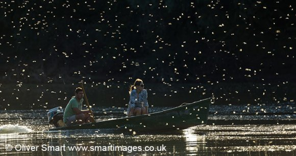 Mayfly emergence, River Tisza, Hungary by Oliver Smart, www.smartimages.co.uk