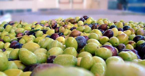 Olives north Cyprus by giroud, Wikimedia Commons