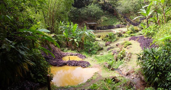 Hot volcanic spa, Dominica by Paul Crask