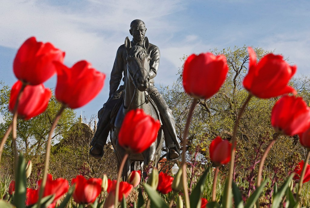 Red tulips grow around the statue of Will Rogers and Soapsuds, Thursday, March 10, 2016, in Lubbock, Texas. [Brad Tollefson/Lubbock Avalanche-Journal]