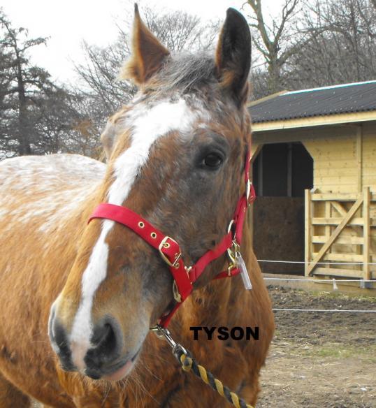 horses_tyson_march_2011