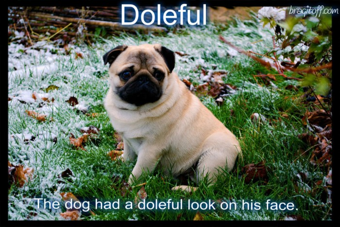 sad dog doleful meaning visual definition visual dictionary sentence with doleful bragitoff