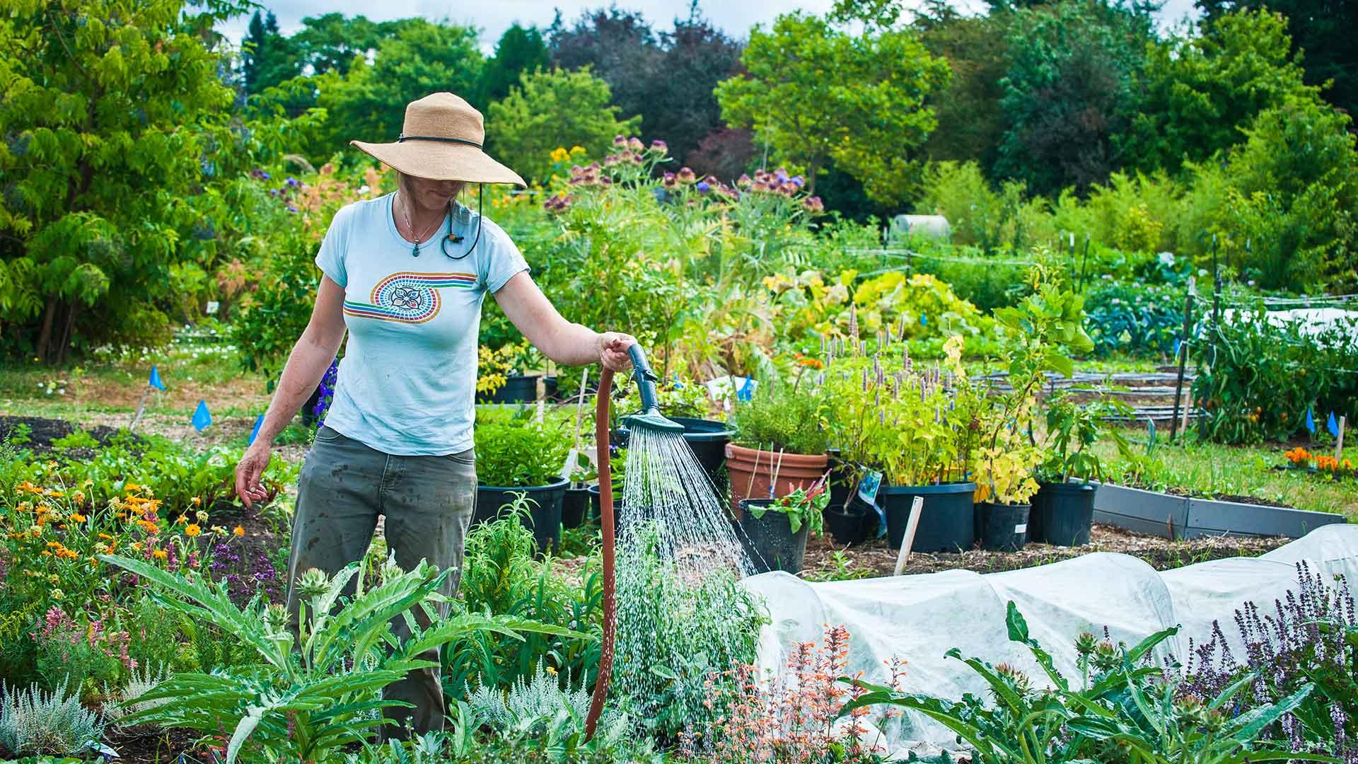 Gardening Projects With Master Gardeners