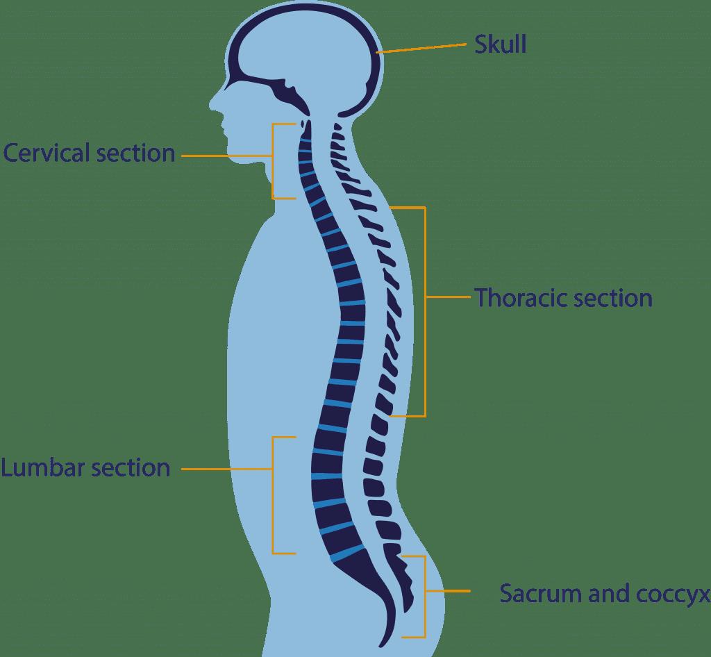 Brain Amp Spine Foundation
