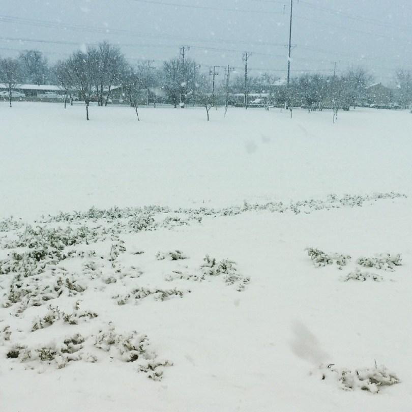 snow-las-cruces5