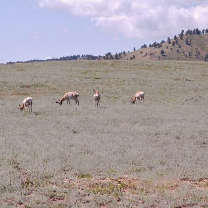 Wildlife Loop Custer South Dakota
