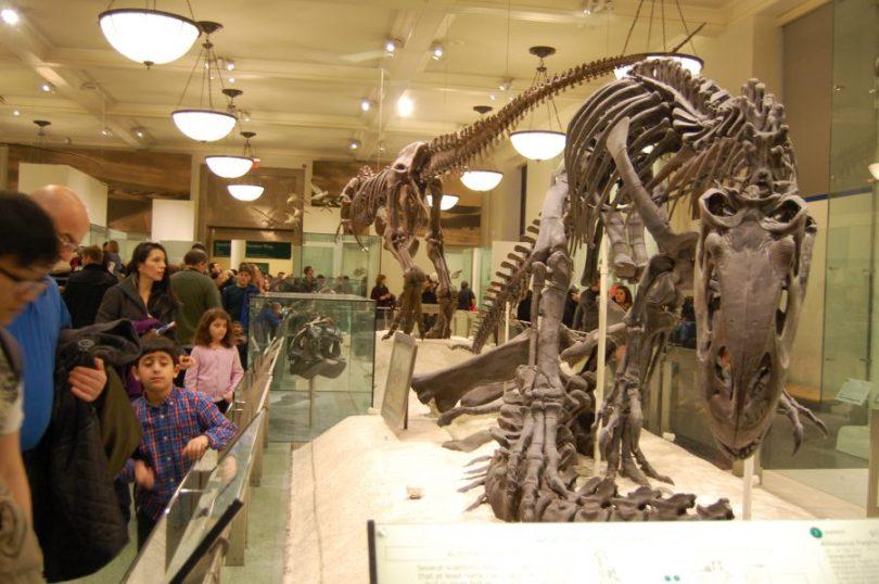 dinasaur skeleton