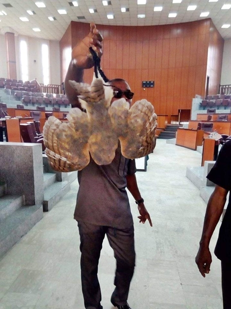 Owl Caught Inside The Chambers Of Akwa Ibom Assembly