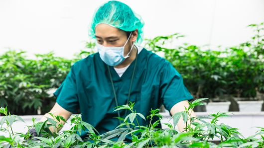 5 New Careers Created By Marijuana Legalization In Canada