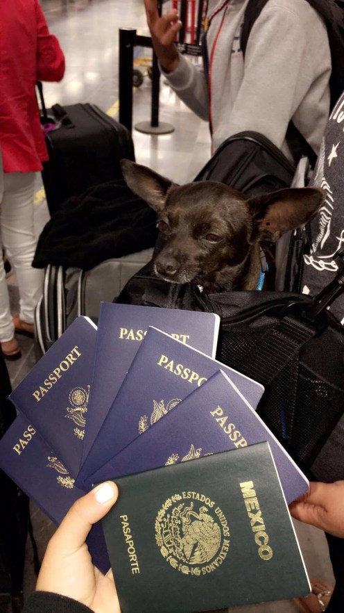 These Are Things You Need To Know And How The Law Works About Nigeria Pet Passport