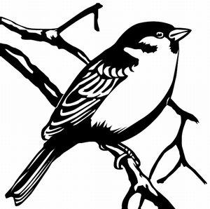 Sparrow Songs: Twelve Films in Twelve Months – Brain Pickings