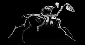 The Natural History of Evolution, in Stunning Black-and-White Photographs of Animal Skeletons