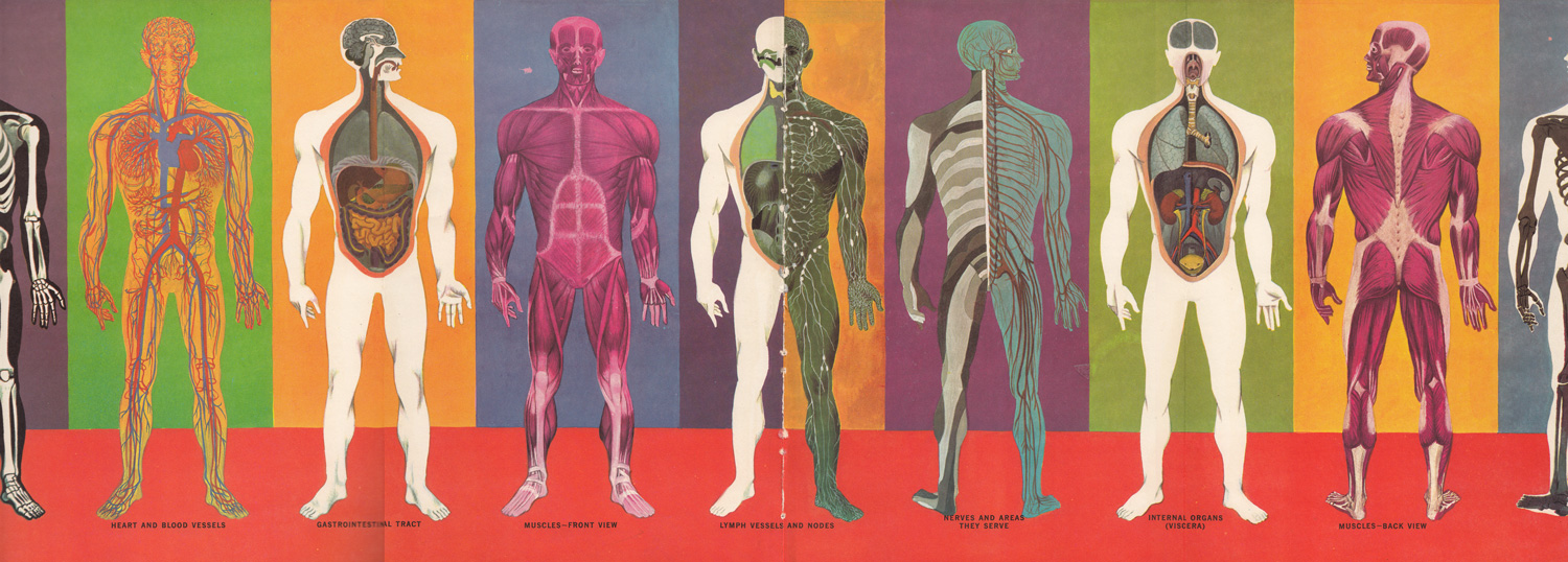 The Human Body What It Is And How It Works In Vibrant Vintage