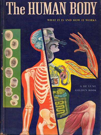 The Human Body: What It Is and How It Works, in Vibrant Vintage Illustrations circa 1959