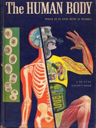 The human body what it is and how it works in vibrant vintage much of our inquiry into what makes us human focuses on understanding consciousness yet we spend the whole of our lives in our physical bodies ccuart Image collections