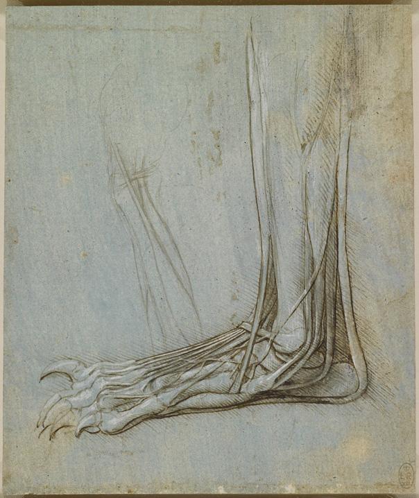 A Rare Glimpse Of Leonardo Da Vincis Anatomical Drawings Brain