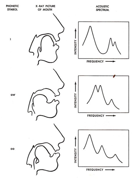 relationship between vocal tract resonances and formants harmonics