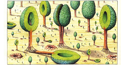 Codex Seraphinianus: History's Most Bizarre and Beautiful ... C Cup Example
