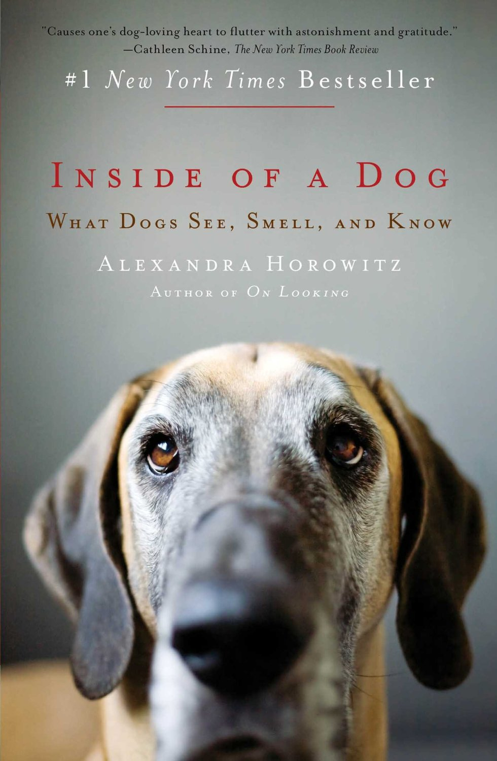 """How a Dog Actually """"Sees"""" the World Through Smell"""