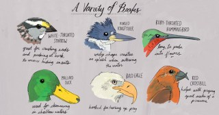 Nature Anatomy: A Glorious Illustrated Love Letter to Curiosity and the Magic of Our World