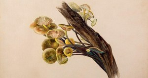 Beatrix Potter, Mycologist: The Beloved Children's Book Author's Little-Known Scientific Studies and Illustrations of Mushrooms