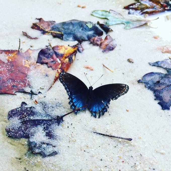 butterfly_asheville