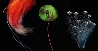 Feathers: A Stunning Photographic Love Letter to Evolution's Masterpiece and Its Astonishing Array of Beauty