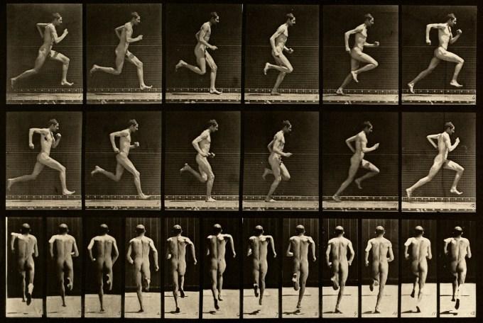 Eadweard Muybridge: Animal Locomotion, Plate 62