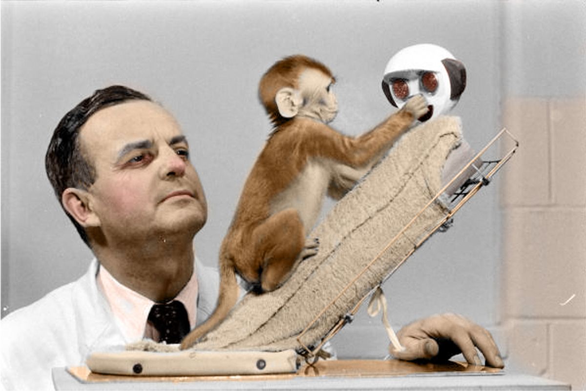 harry harlow attachment monkeys ethical In a set of classic studies in the 1950s and 1960s, harry harlow and others investigated the nature of attachment in young rhesus monkeys in one study (harlow & zimmerman, 1959), the researchers exposed young monkeys to two artificial mothers, one wrapped in toweling cloth, and another made of bare wire, but with a feeding bottle.