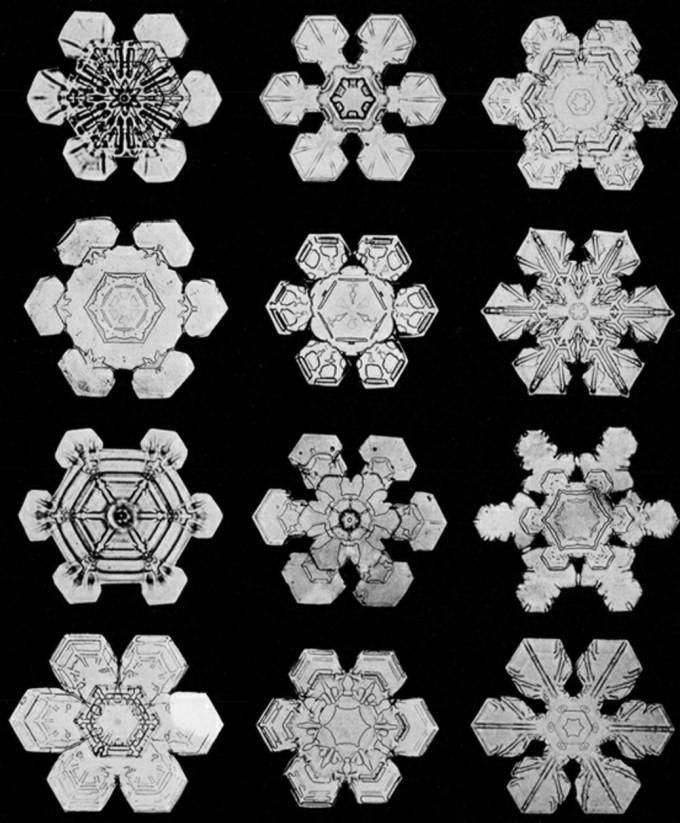 wilsonbentley_snowflakes12.jpg?resize=680%2C823