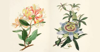 The Moral of Flowers: An Illustrated Victorian Encyclopedia of Poetic Lessons from the Garden