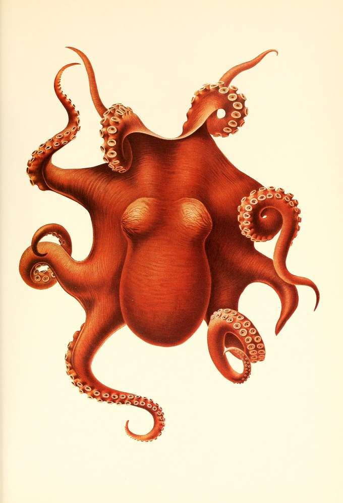 CephalopodAtlas16.jpg?resize=680%2C996