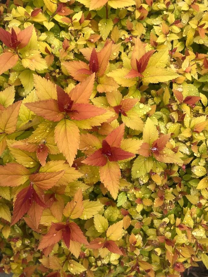 GardenSupernovae_by_MariaPopova.jpg?resize=680%2C907