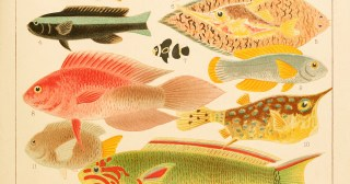 The Great Barrier Reef: Stunning 19th-Century Illustrations from the World's First Encyclopedia of One of Earth's Most Vibrant and Delicate Ecosystems