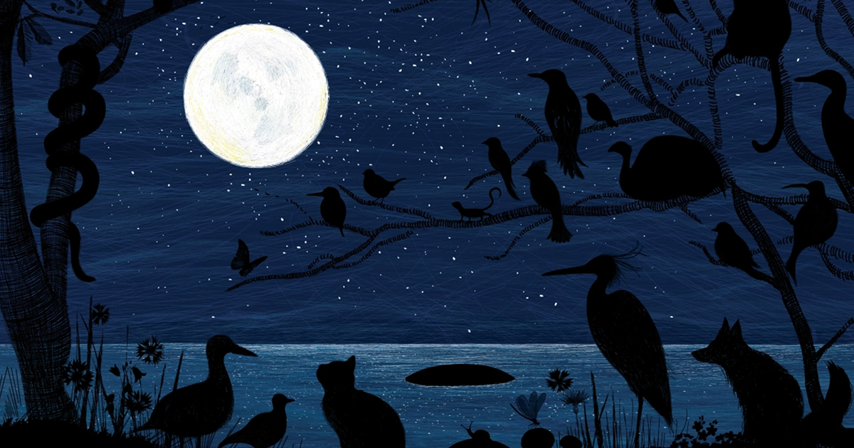 The Blue Hour: A Stunning Illustrated Celebration of Nature's Rarest Color