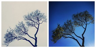 Wintering: Resilience, the Wisdom of Sadness, and How the Science of Trees Illuminates the Art of Self-Renewal Through Difficult Times