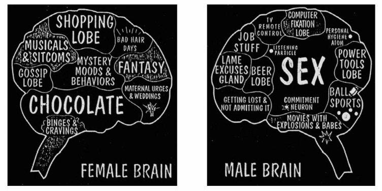 Female brain sexuality and reproduction