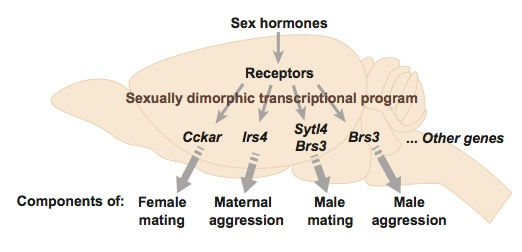 Hormones from sex