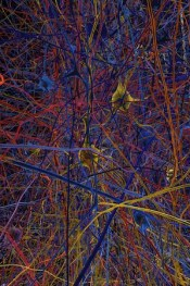 simulated neurons