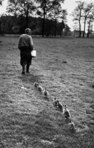 konrad lorenz goslings