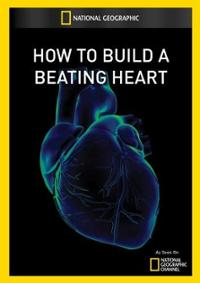how-to-build-a-beating-heart (1)