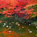 東京都 小石川後楽園の紅葉の写真