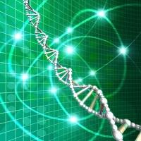 遺伝子のイメージ図