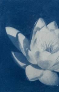 cianotipia---Branco-Ottico09