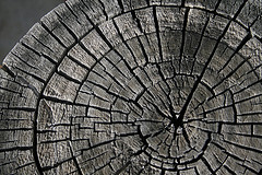 Log Texture, by Playingwithbrushes