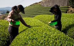 Two Tea Picking Tourists, by David Edwards