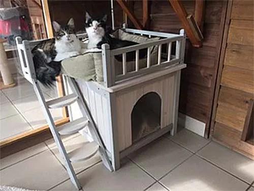 cat-den