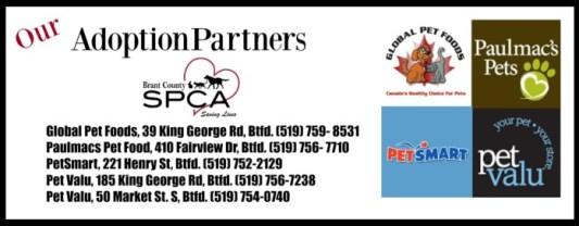 adoption partners